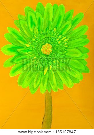 Green gerbera flower on yellow background, painting in watercolours