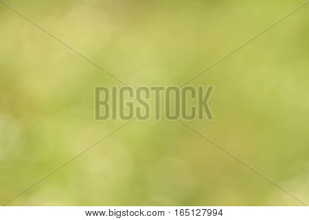Abstract bokeh green background. Photography at sunny day.