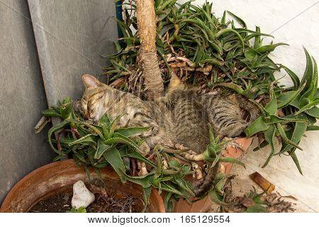 Kitten With Mum Sleeping On The Ground