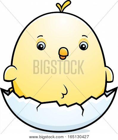 Cartoon Baby Chicken Egg