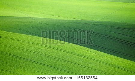 Green grass background. Green spring backdrop. Fields of green wheat in spring. Green wheat in morning sunlight. Space for text on green grass background.