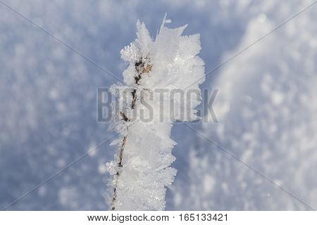 large openwork of frost crystals of frost on blurred natural snow background