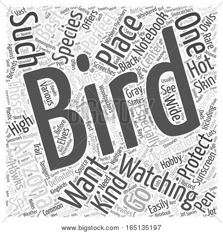bird watching in arizona Word Cloud Concept
