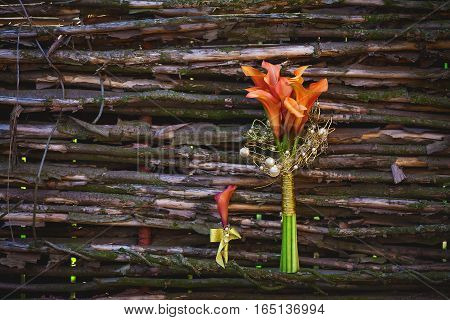 orange calla lilies on a background wicker wooden fence