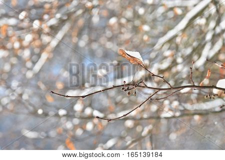 Winter landscape. Frost on branches. Beautiful winter seasonal natural background.