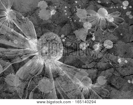 Grey Flower Fantasy Frame Abstract Background Textured Grunge