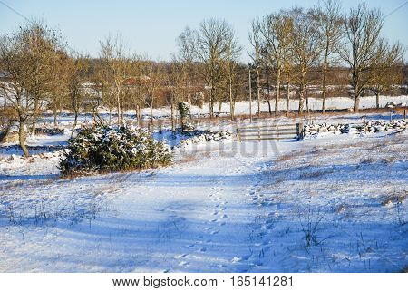 Winterland with an old wooden gate by a stone wall at the Swedish island Oland