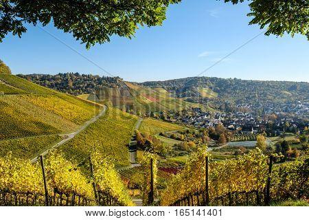 Die Art aus dem Schatten des Baumes auf die reifenden Weingarten.