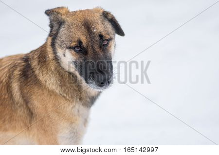 Outdoor portrait of cute mixed-breed stray dog at winter season