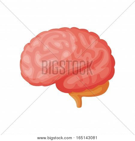 Human brain internal organ medicine anatomy element vector illustration. Respiratory people body part structure. Science system biological health symbol.