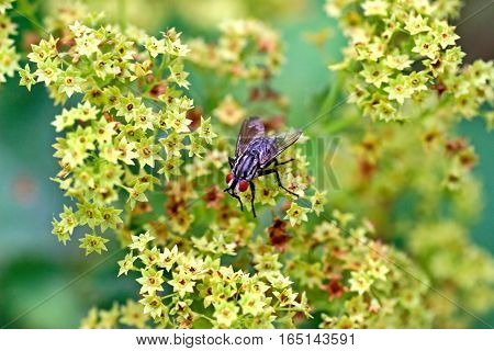 A fly with red eyes sitting on a plant