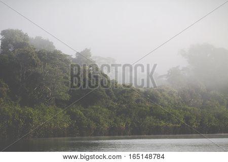 Amazon Rainforest in Peru in South America