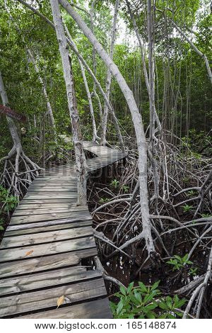 Wood Footpath In Tropical Rain Forest In Colombia.