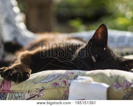 Cat lounging on a cushion in the sun.