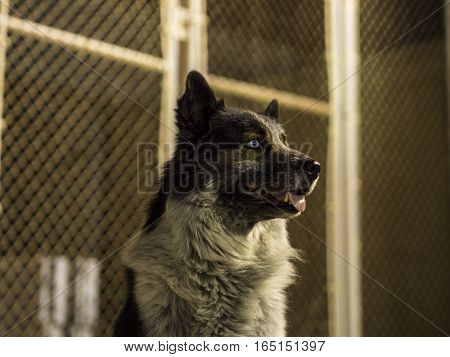 Dog in front of a chainlink fence at night