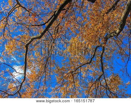 Orange And Yellow Leaves On Branches