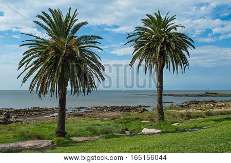 palm trees on the coast in Uruguay