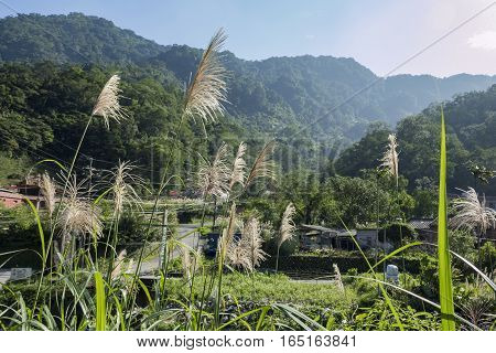 The Beautiful Country Side Landscape Of Wulai