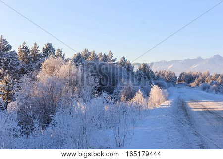 Bushes in snow at the road in beams of the sun