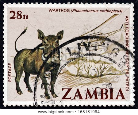 ZAMBIA - CIRCA 1999: a stamp printed in Zambia shows Desert Warthog Phacochoerus Anthiopicus Animal circa 1999