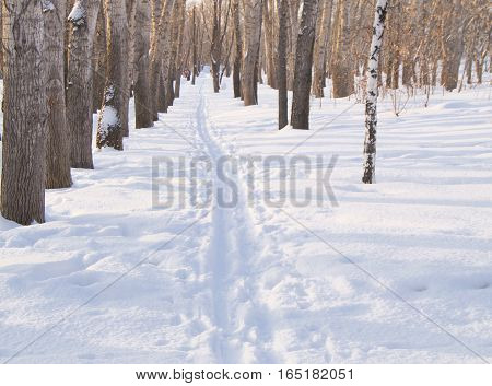 Ski track on snow in winter Park for sports.