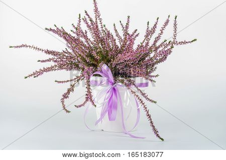Heather in a white vase with purple ribbon