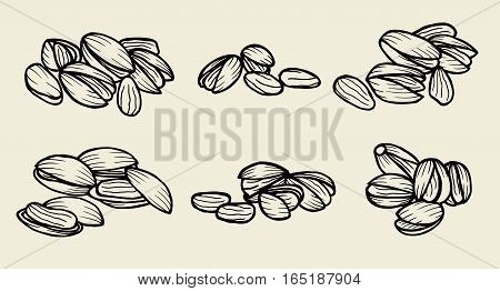 Monochrome Pistachios. Isolated whole and split pistachio nuts and kernels. Vector sketch pistachio element for product label, packaging sticker, grocery shop tag, farm store