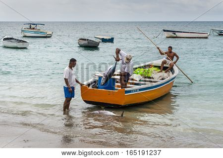 Tamarin Mauritius - December 8 2015: Unidentified fisherman carry tuna fish as they unload a catch from a boat at Tamarin Bay in Mauritius.