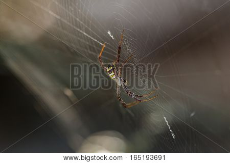 Spider on a spider web with a natural background