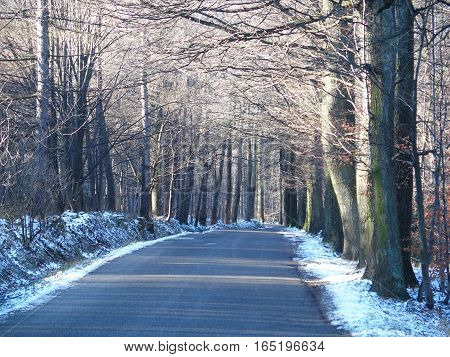 Road drive in abandoned forest avenue with two rows of trees sides in Beskid Mountains near city of Bielsko-Biala in Poland in cold winter day, EUROPE, December.