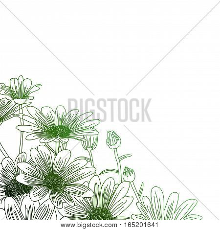 Daisy flowers on a green background outline drawing. Vector flowers illustration.