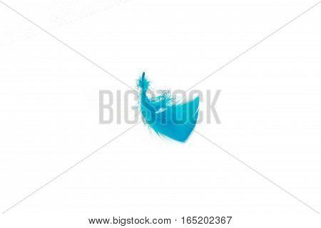 Blue Bird Feather, Isolated On White Background