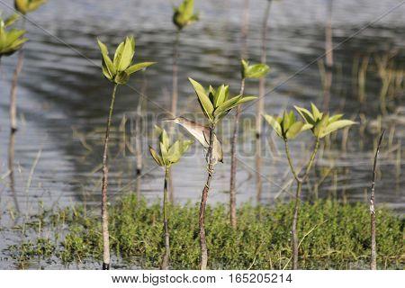 A skinny brown bird battling the wind