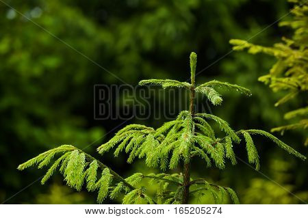 The vegetation of coniferous forests and alpine meadows