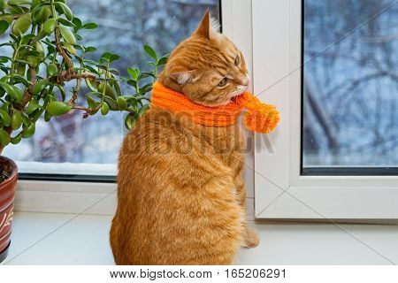 Ginger striped cat sitting on the window sill