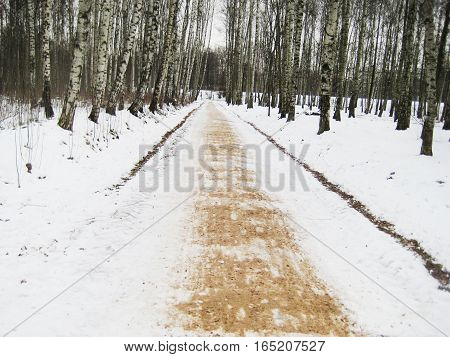Winter season forest scene landscape with trunks and road with sand adapted for people walking running. Outdoor park at the countryside in the cold snowy morning.