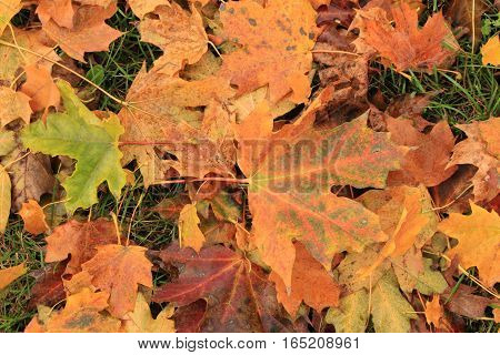 Fallen leaves /Fallen leaves background on autumn.