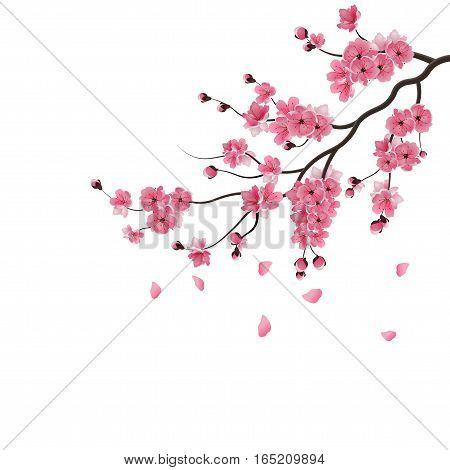 Japanese sakura. The branch of dark pink sakura blossom. Isolated on white background. Vector illustration