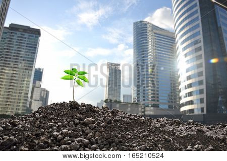 Young plant growing in polluted city Environmental concept