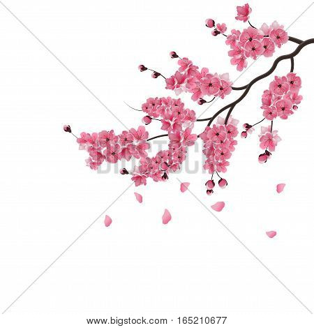 Japanese sakura. Lush the branch of dark pink sakura blossom. Isolated on white background. Vector illustration