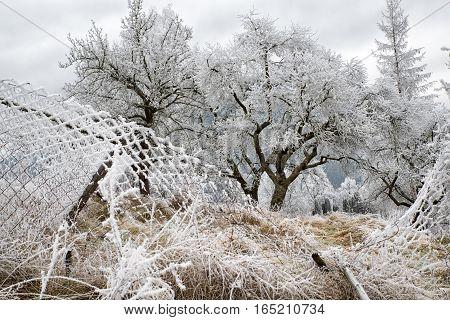 Frozen trees in winter country. Frozen mesh