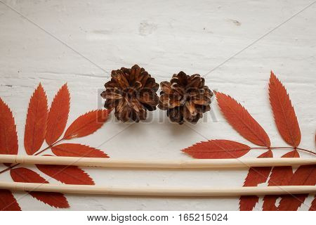 packing: set of the Chinese sticks, branches of a mountain ash and forest cones. the hands