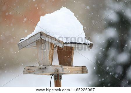 Simple Bird Feeder In Winter Garden