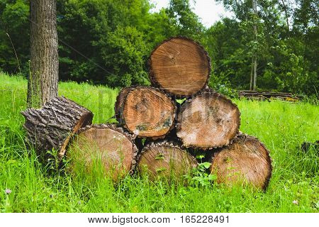 Wood stacked for drying in the woodpile on the green meadow. Nature material texture brown bark cut environment pile.
