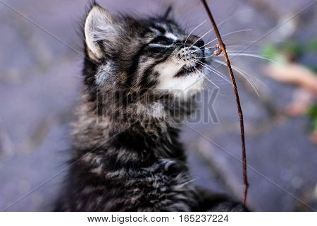 kitten, kitten playing, kitten standing on hind legs