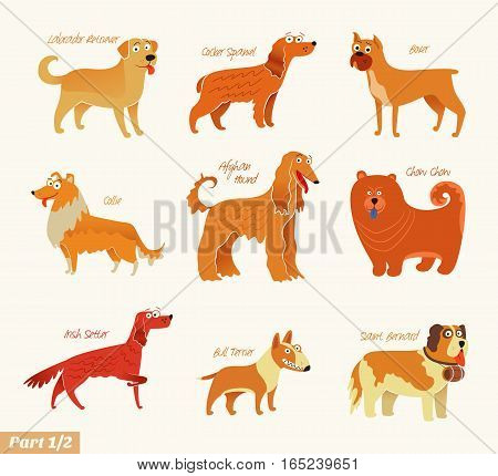 Dog breeds. Bull Terrier, Chow Chow, Collie, Saint Bernard, Cocker Spaniel, Irish Setter, Boxer, Labrador Retriever, Afghan Hound. Funny cartoon character. Vector illustration Isolated on white. Set 1