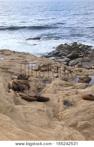 Vertical image of beach, with rocky shores and sea lions resting under warm Summer sun.