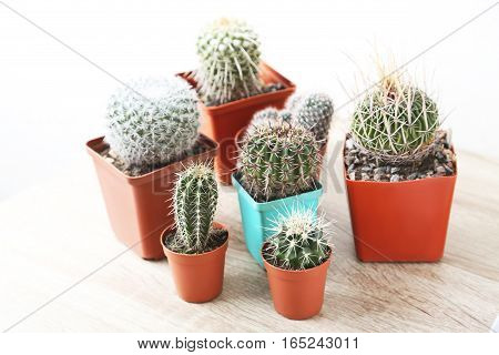Cactus in pot on a wooden table