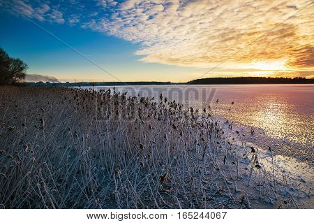 Sun sets over frozen rushes of Lake Elckie. Masuria. Poland.