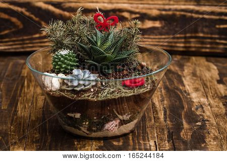 Miniature succulent plants in a glass vase on wooden background